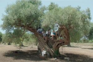 Olivetree_VideoStill_