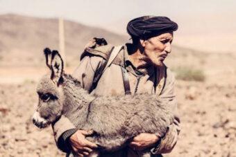 Έκθεση Φωτογραφίας «Στο διάβα» Ανακαλύπτοντας τη μεταβατική και νομαδική κτηνοτροφία στη Μεσόγειο